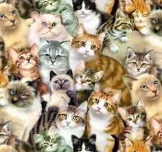 Fat Quarter Petpourri (Cats & Kittens) Cotton Quilting Fabric - 50cm x 55cm