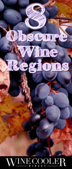 You are probably familiar with the famous wine regions of the world, but what about these obscure regions? Click to read more.