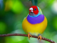 Stunning Bird in CostaRica ~