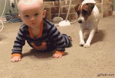 ハイハイしている赤ん坊の後ろから犬がハイハイの真似をするGIF画像 created by rigoberto_blanditiis