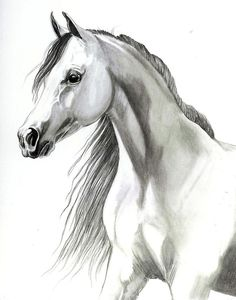Arabian Mare Drawing