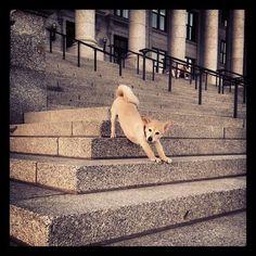#DownwardDog #Ford #mustlovedogs