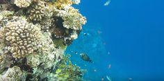 Coral Reef Pictures, Aquarium, Water, Outdoor, Goldfish Bowl, Gripe Water, Outdoors, Aquarium Fish Tank, Outdoor Games