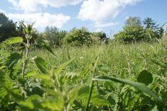 Green Field In Denmark