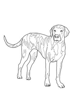 Click To See Printable Version Of Plott Hound Coloring Page