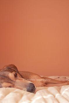 Sleepy Dog | Christina Terrano
