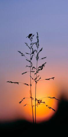Sunset #sunset  #nature #photography