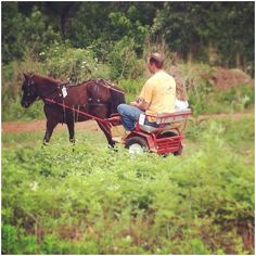 1000 Images About Pony Carts On Pinterest Ponies Amish And Miniature Horses