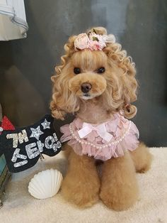 OMG so cute ☺️ #Poodle