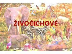 ŽIVOČICHOVÉ.> Elephant, Animals, Animales, Animaux, Elephants, Animal, Animais