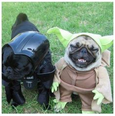 Pug Pals ~ Happy Hallowen!
