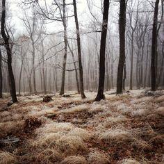 when fall meest winter. - by Ivan Spišiak Half Elf, Connie Springer, Southern Gothic, Dark Forest, Elder Scrolls, The Witcher, Dragon Age, Sculpture, Storyboard