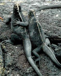 Love!!!!....In Galapagos Islands, Ecuador.