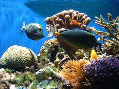 Sua casa, a Terra: Por que a água do mar é salgada?
