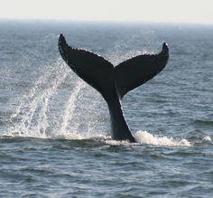 Interesting Sea Creatures