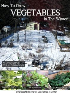 Yes, you really can grow veggies all through the winter! See how at empressofdirt.net/grow-vegetables-in-winter