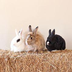 Beautiful Rabbit, Basset Hound, Rottweiler, Animal Photography, Kitten, Instagram Images, Bunny, Pets, Animals