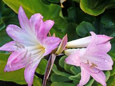 10 plantas muy venenosas | Cuidar de tus plantas es facilisimo.com