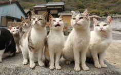 Crazy Cat Lady, Crazy Cats, Cat 2, Dog Cat, Cat Island Japan, I Love Cats, Cute Cats, Japanese Cat, Kitty Games