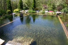 a natural swimming pond is a great alternative to a standard pool DigsDigs - 67 Cool Backyard Pond Design Ideas Swimming Pool Pond, Natural Swimming Ponds, Natural Pond, Swimming Pool Designs, Ponds Backyard, Garden Pool, Water Garden, Backyard Ideas, Garden Ideas