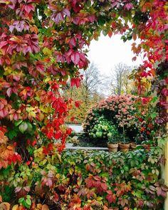 Галкин и Пугачева показали роскошный сад в своем замке