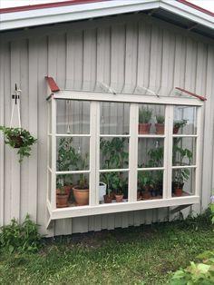 """Växthusvägg: har använt 6 gamla fönster. Fönstren på gaveln sitter fast i reglarna, hyllan på konsoler och de fyra främre fönstren sitter i """"spår"""" och plockas ut/dras ut från sidan"""