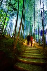 Image result for Arashiyama Bamboo Forest, Japan