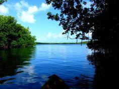 Bio Luminescent  Bay Puerto Rico