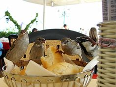 Lunch With Sparrows, St.marco Square, Venice: Tame sparrows eating my lunch at St.Marks Square in Venice, one lovely afternoon in May. #travel #Italy #adorable