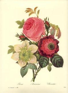 Redoute Botanical Flower Print ~Rose Bouquet