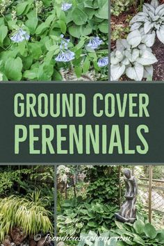 Looking for perennial ground cover plants that will thrive in your shade garden? This list of easy to grow flowering perennials is perfect for shady landscaping. Dwarf Plants, Tall Plants, Shade Plants, Perennial Ground Cover, Ground Cover Plants, Backyard Trees, Backyard Shade, Backyard Landscaping, Backyard Retreat