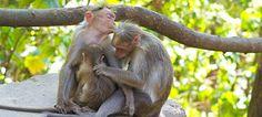 primates and human characteristics