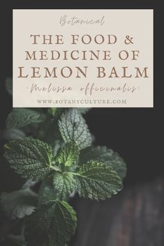 Holistic Remedies, Herbal Remedies, Health Remedies, Natural Remedies, Herbal Medicine, Natural Medicine, Lemon Balm, Medicinal Plants, Herbal Witch