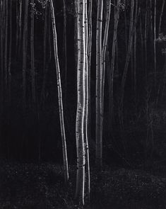 Philadelphia Museum of Art - Collections Object : Aspens, Northern New Mexico