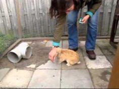 clickertraining konijnen