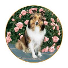 Sheltie Decorative Plate