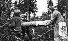Syksyllä 1917 elintarvikepula oli niin paha, että osa kansasta joutui kuorimaan männyistä pettua jauhojen jatkeeksi.