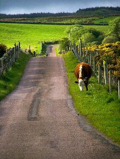 Road to Corran Farm (Cornwall, England) by Mick Garratt cr.c.