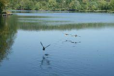 Lac de Gassicourt #manteslajolie