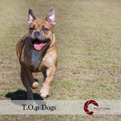 T.O.p Dogs by PhoDOGraphy by Edith