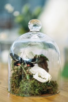 Bell jar with butterfly