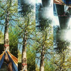 Kinda a panorama fail. #hammocklife #panorama #lunchbreak by @dogwoodsbark