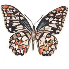 """Jillian Darville Art en Instagram: """"The Lime Swallowtail Butterfly 🌿"""" Butterfly Watercolor, Rooster, Lime, Animals, Instagram, Art, Craft Art, Lima, Animaux"""