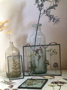Pressed wild flowers - photo taken from country living magazine