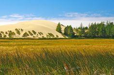 Sand Dunes Engulfing Trees in Oregon