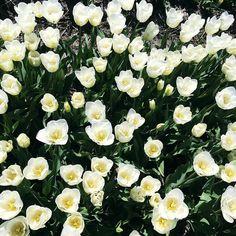 Saturday blooms  Hope everyone is enjoying the sunny weekend Instashop link up top