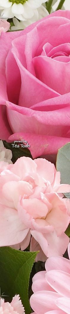 ❇Téa Tosh❇ Pink Gift Bouquet