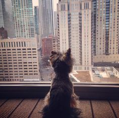 "Pets are welcome at Thompson Chicago, at no additional fees to owners, with food bowls, a toy, and a ""Pet in Room"" sign for the door. Starting in April, Thompson Chicago will offer a $50 upgrade to the standard package, which will include all of the above items, plus a ceramic Thompson dog bowl, leash, dog toys, a bandana and treats from Tails in the City (a pet boutique located a couple of blocks from the hotel)."