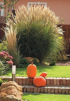 Chata, Grass, Pumpkin, Gardening, Vegetables, Plants, Outdoor, Landscape, Ideas