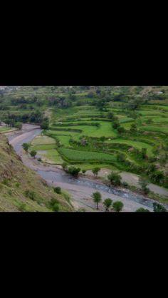 terraced agriculture - Yemen